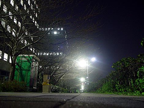 隅田川・中央区側の新川公園写真 桜はまだ咲いていない