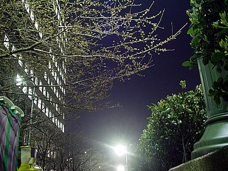 隅田川・中央区側の新川公園写真 ちょっと近づく