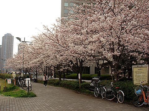 隅田川近く・中央区新川